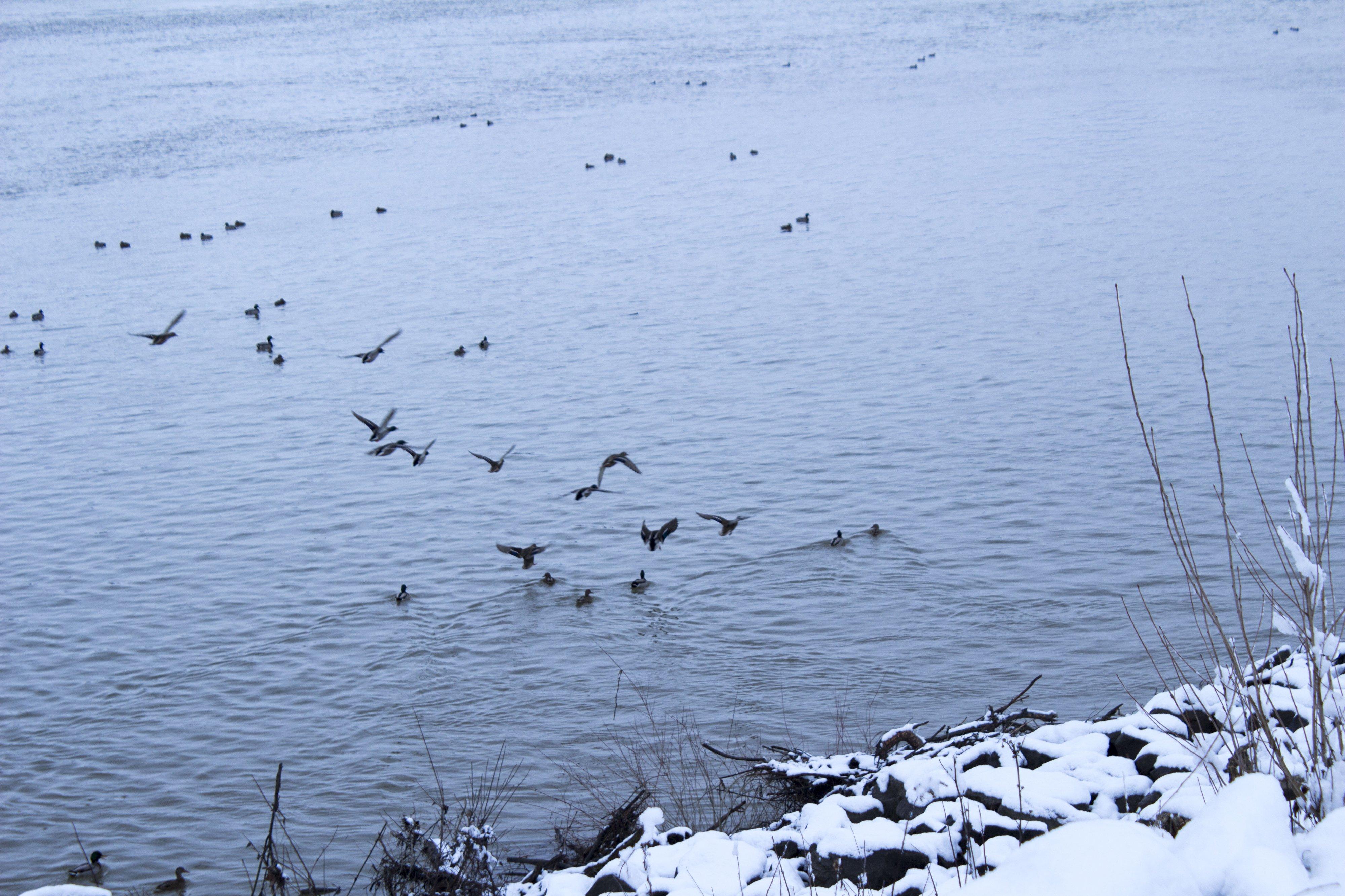 Téli madárvilág